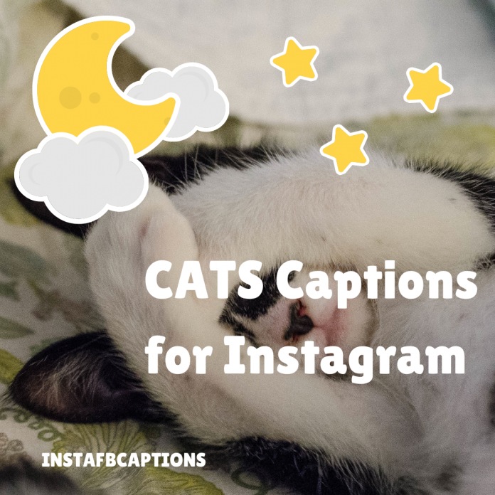 Cats Captions For Instagram