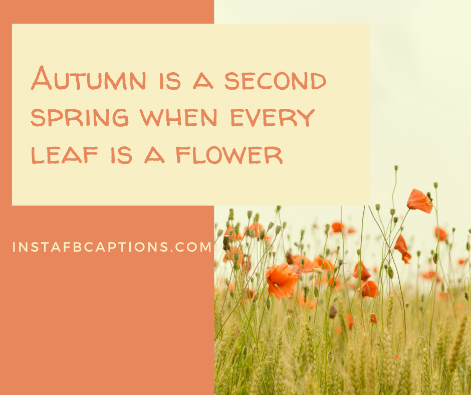 November Quotes for Calendar  - Autumn is a second spring when every leaf is a flower - NOVEMBER Instagram Captions, Quotes and Sayings 2021