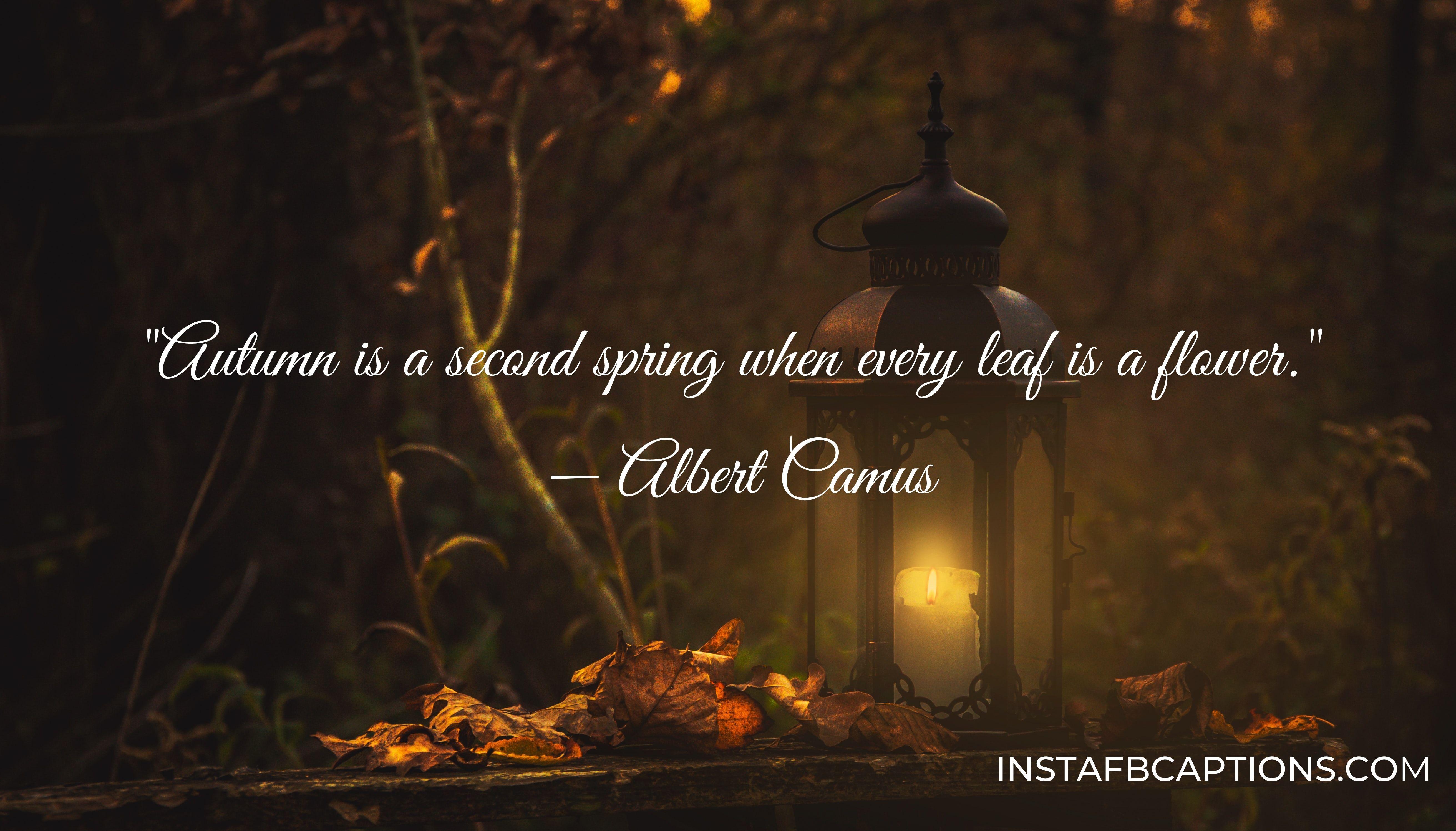 Autumn Inspirational Captions  - Autumn Inspirational Captions - 120+ FALL Instagram Captions for AUTUMN 2021