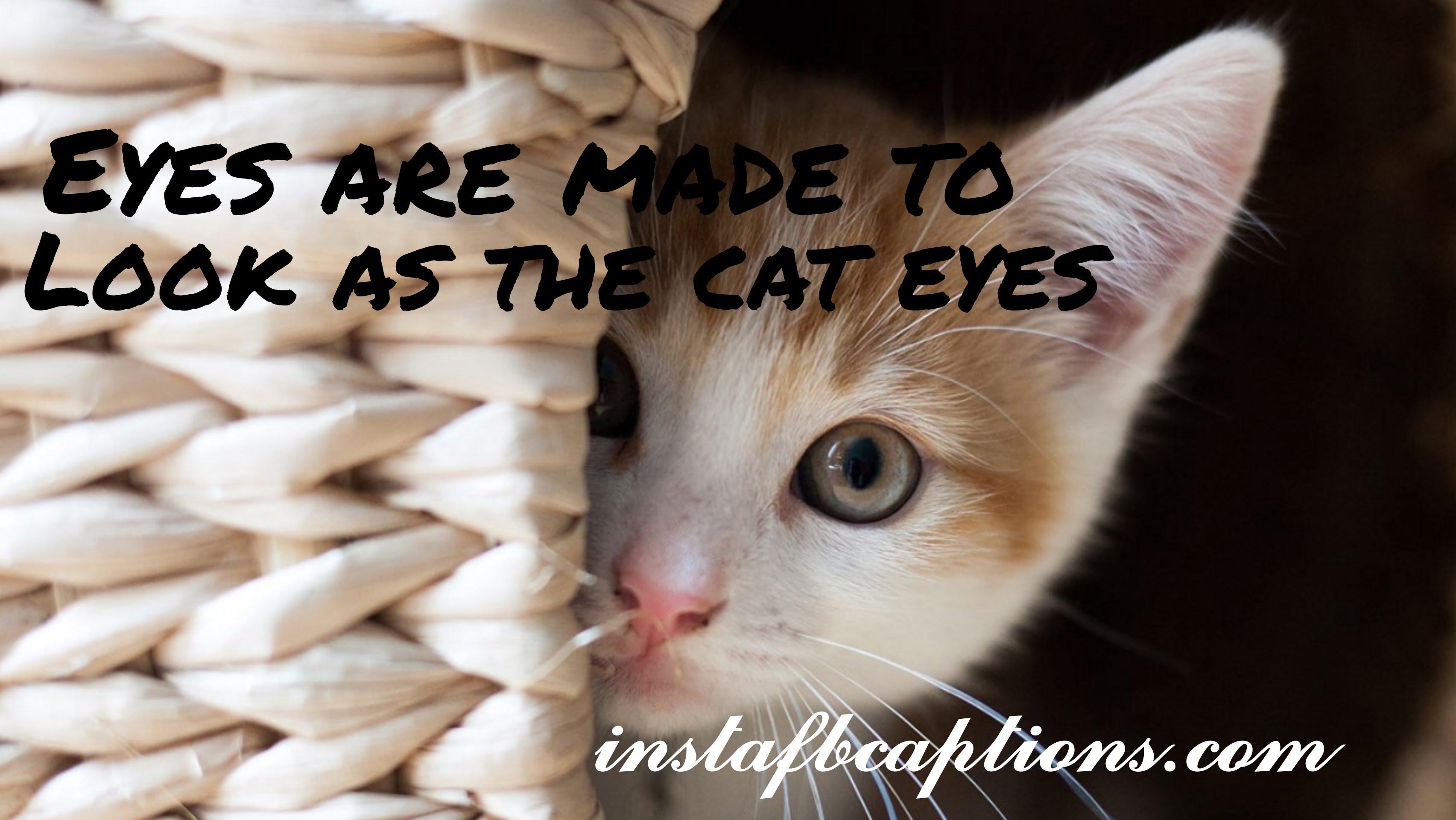 Cat Eyes Captions  - Cat Eyes Captions - 150+ CATS Instagram Captions 2021