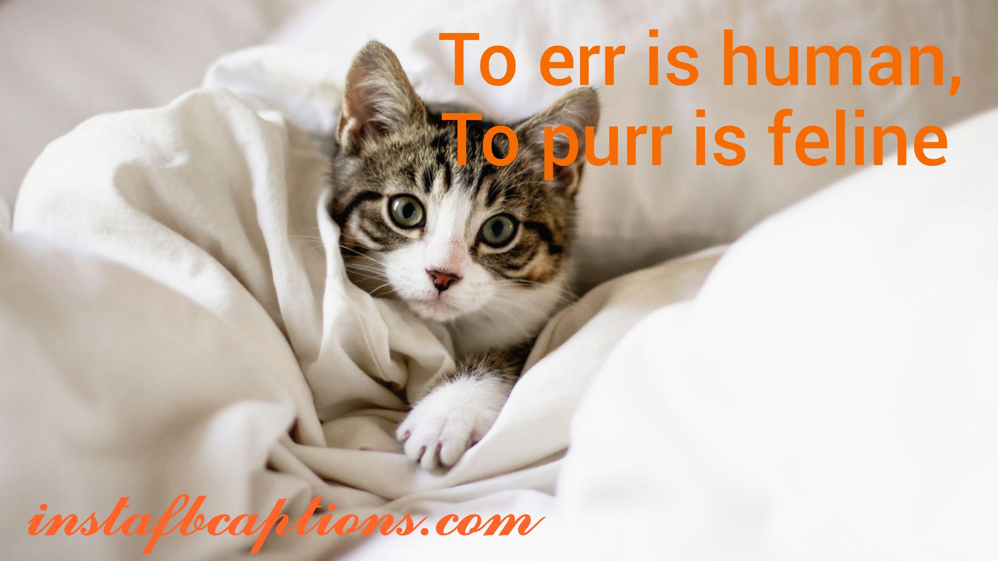Cat Quotes For Instagram  - Cat Quotes for Instagram - 150+ CATS Instagram Captions 2021