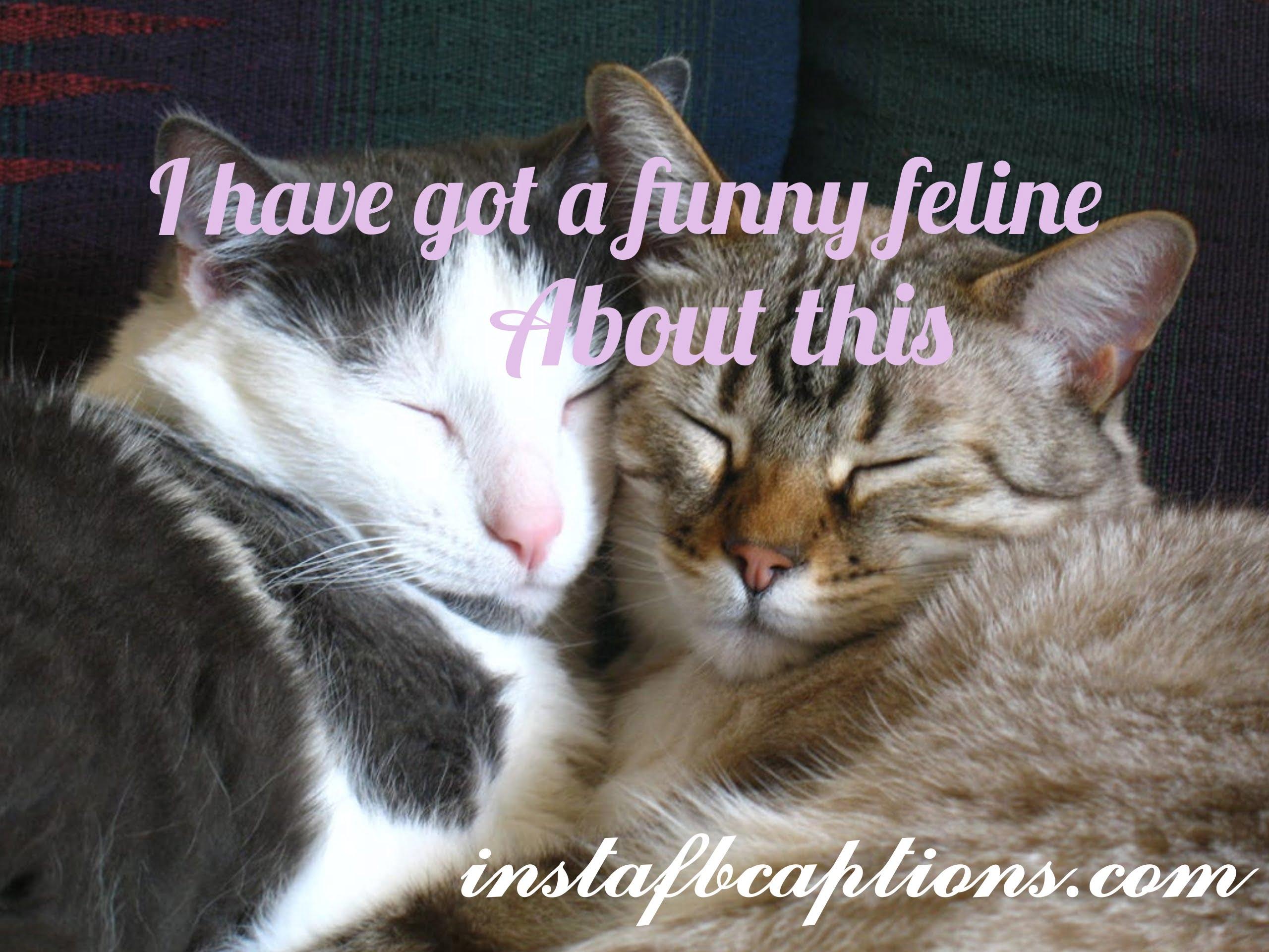 Funny Cat Captions  - Funny Cat Captions - 150+ CATS Instagram Captions 2021
