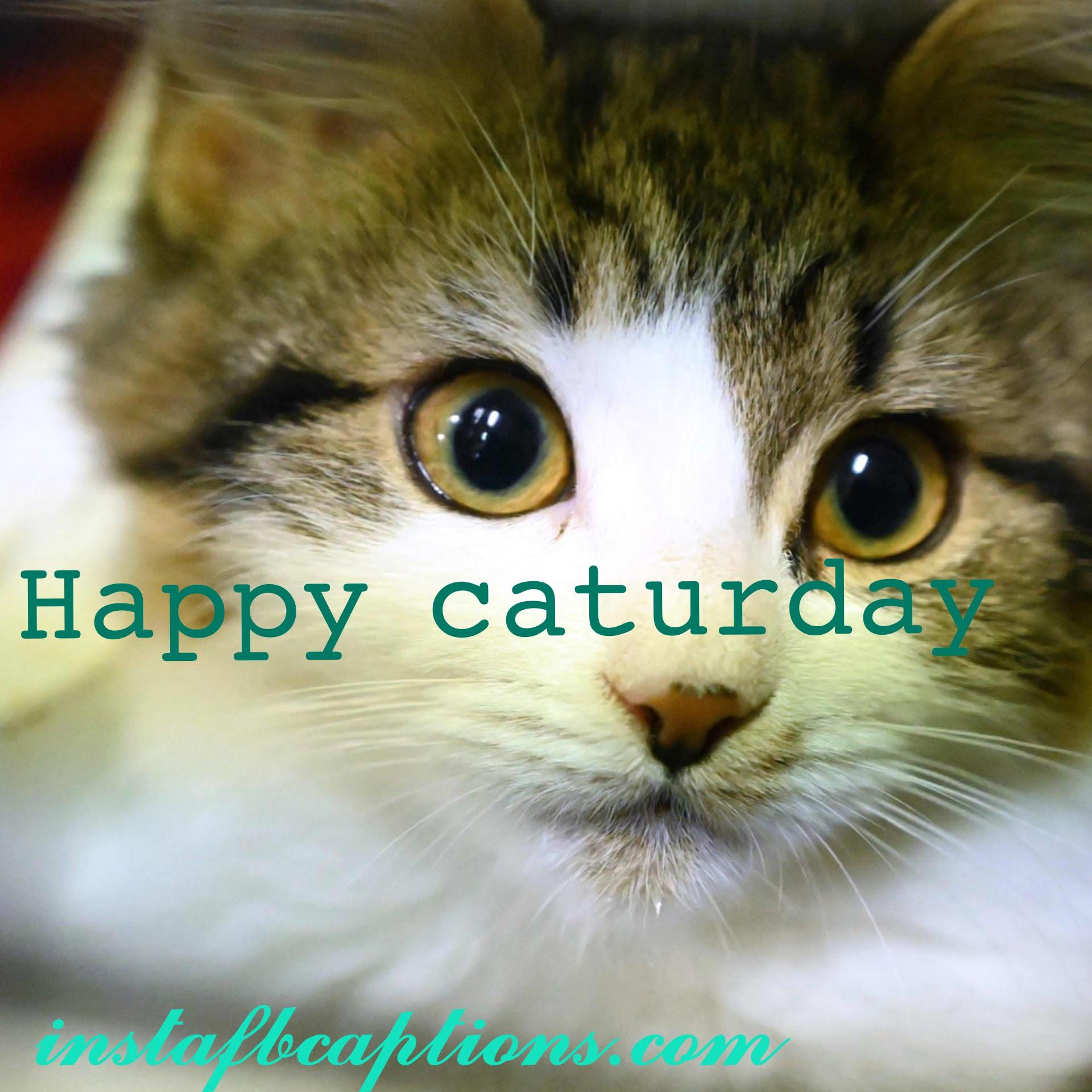 Grumpy Cat Captions  - Grumpy Cat Captions - 150+ CATS Instagram Captions 2021
