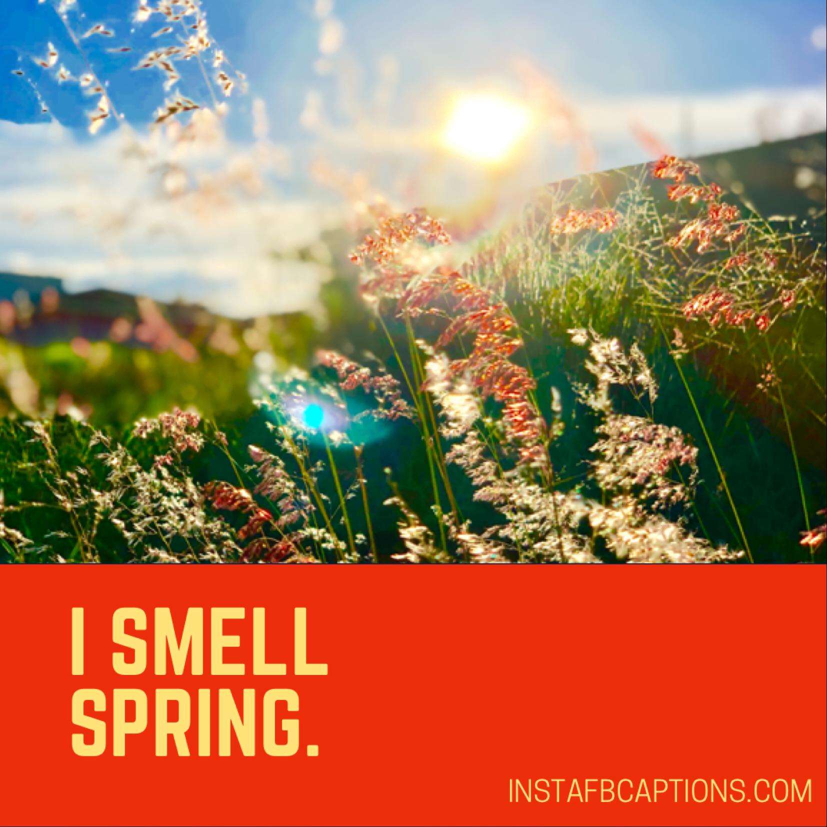One Line Spring Captions  - One Line Spring Captions - 150+ Best SPRING Instagram Captions 2021