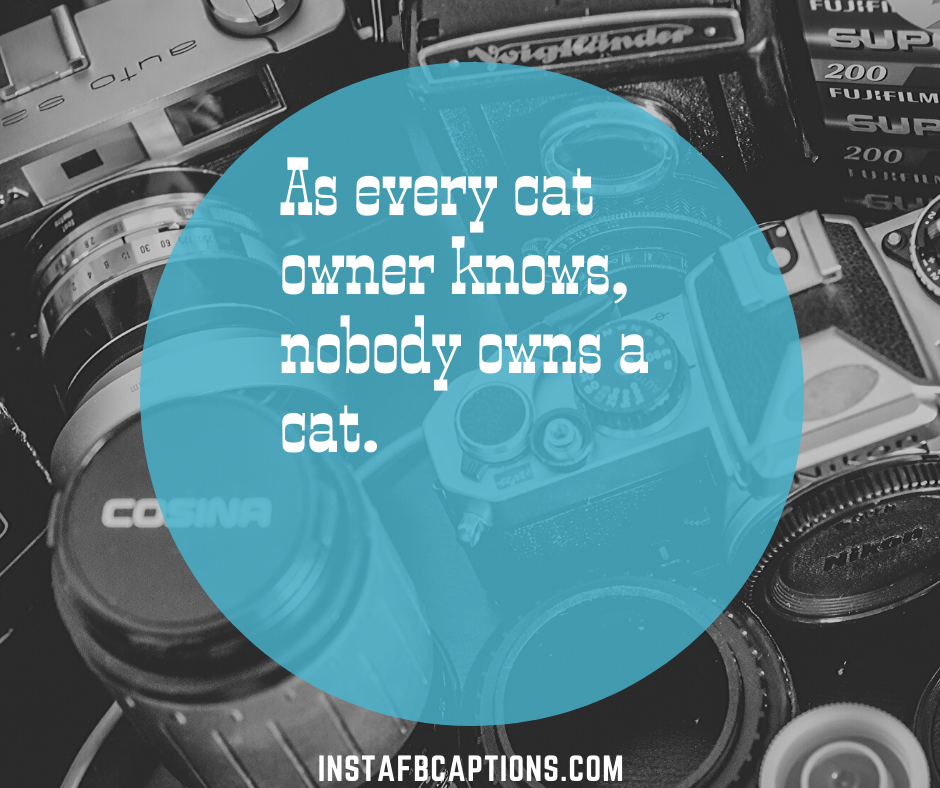 Short Cat Captions  - Short Cat Captions - 150+ CATS Instagram Captions 2021