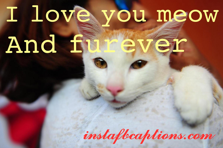 Love Cat Captions  - love cat captions - 150+ CATS Instagram Captions 2021