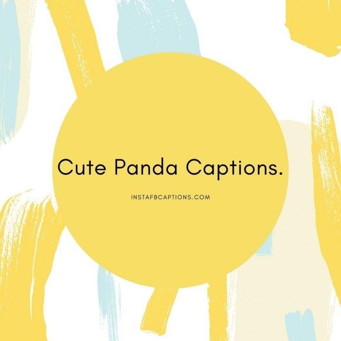 Cute Panda Captions (1)