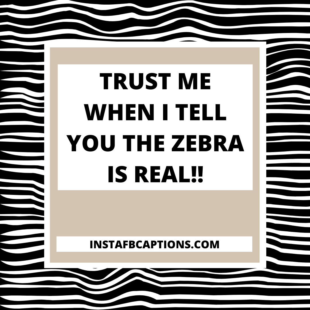 0001 4869788189 20210727 024359 0000  - 0001 4869788189 20210727 024359 0000 - 110+ Zebra Print Captions for Instagram Pictures in 2021