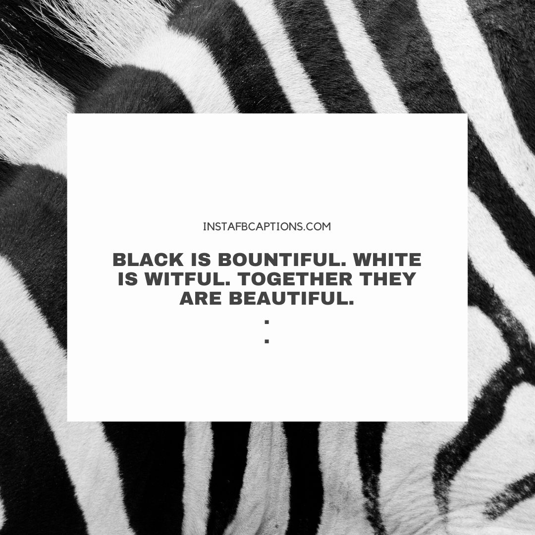 Zebra Prints Captions  - Zebra Prints Captions - 110+ Zebra Print Captions for Instagram Pictures in 2021