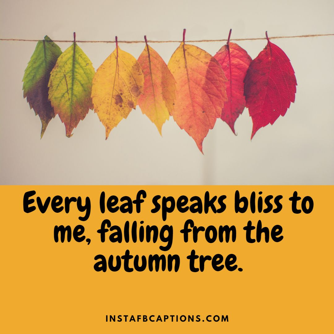 Cute Captions For The Fall Seaso  - Cute Captions for the Fall Season - 100+ OCTOBER FALL Instagram Captions & Quotes for 2021