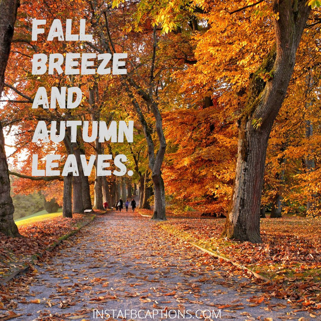 Hello! Autumn Captions  - Hello Autumn Captions - 100+ OCTOBER FALL Instagram Captions & Quotes for 2021
