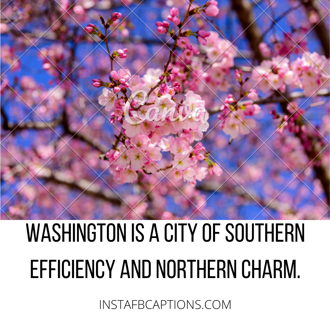 Cherry Blossoms In Washington D.c Quotes  - Cherry Blossoms in Washington D - Washington DC Captions and Quotes for Instagram in 2021